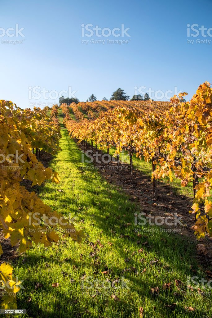 Vineyard magazine cover stock photo