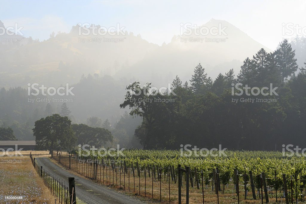 Vineyard Morning Mist royalty-free stock photo