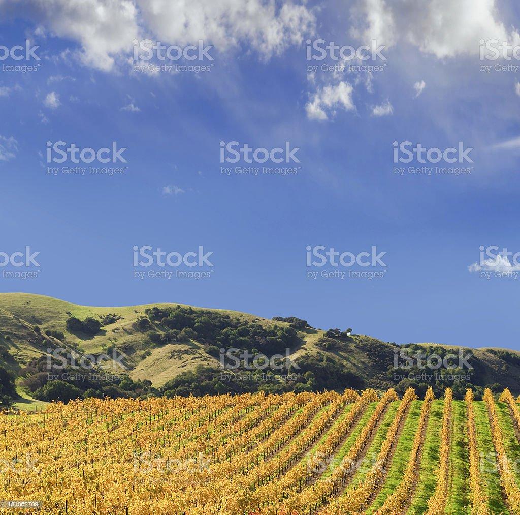 Vineyard Napa Valley royalty-free stock photo