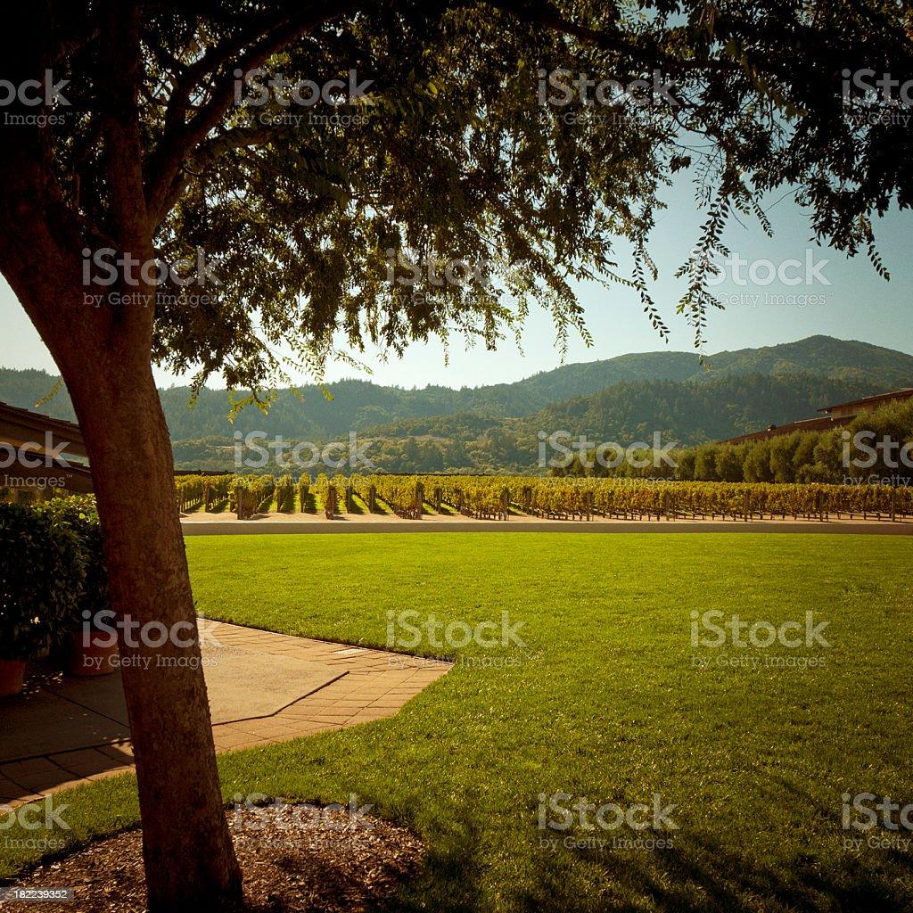 vineyard napa valley stock photo