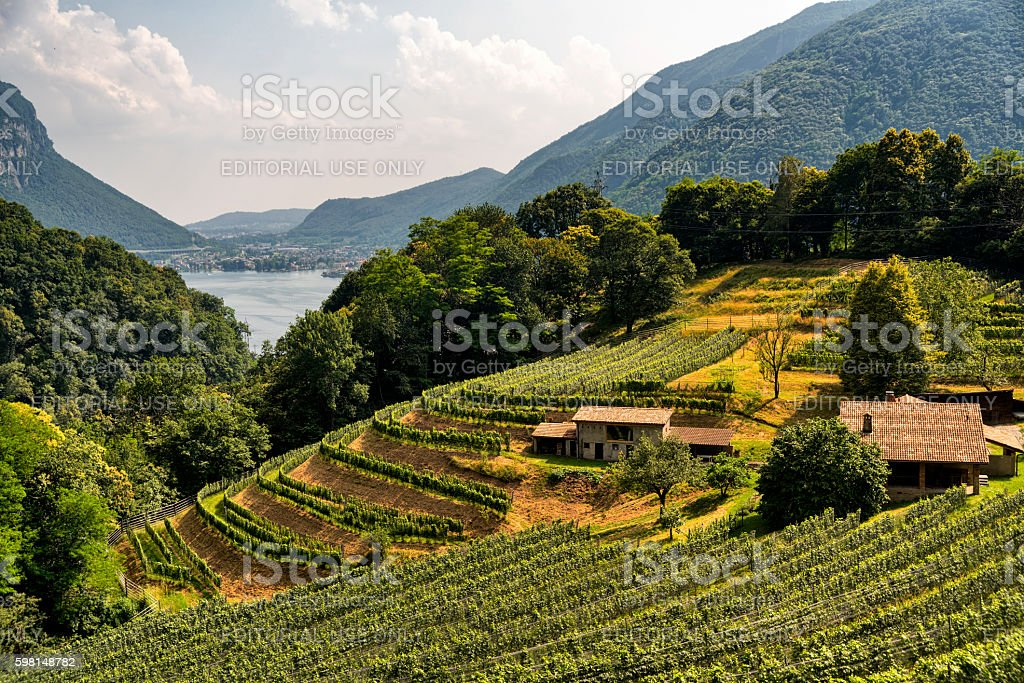 Vineyard near Arogno (Ticino, Switzerland) stock photo