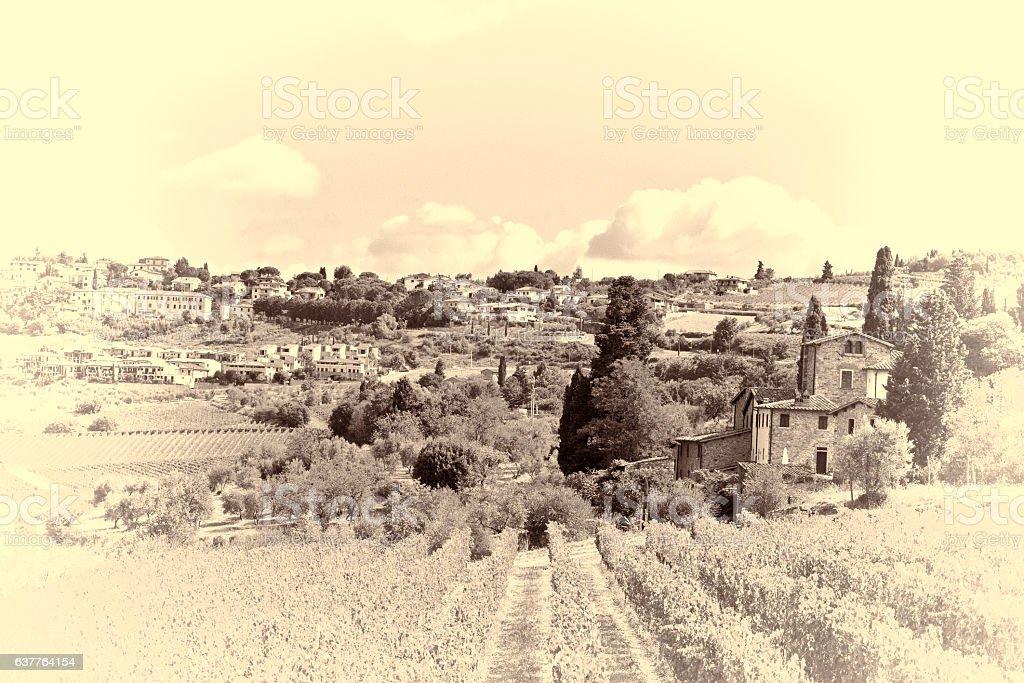 Vineyard near City stock photo