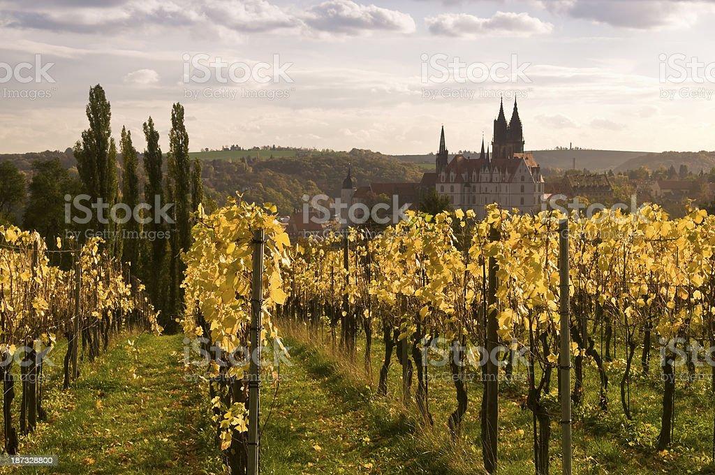 Vineyard near Meissen in Germany stock photo