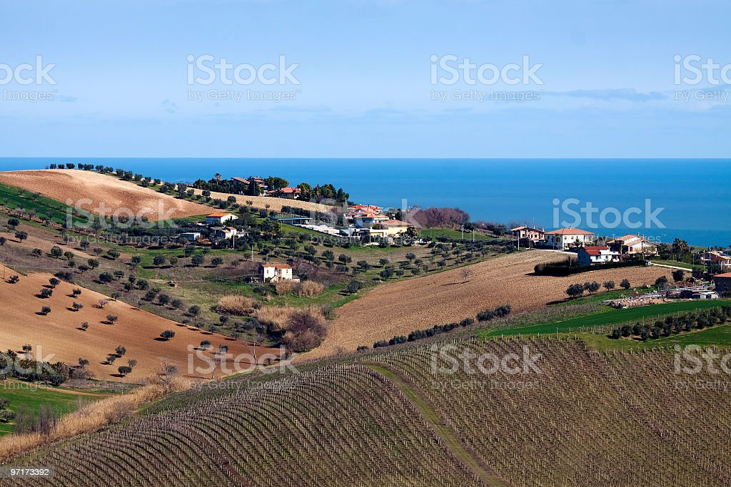 Vineyard near sea stock photo