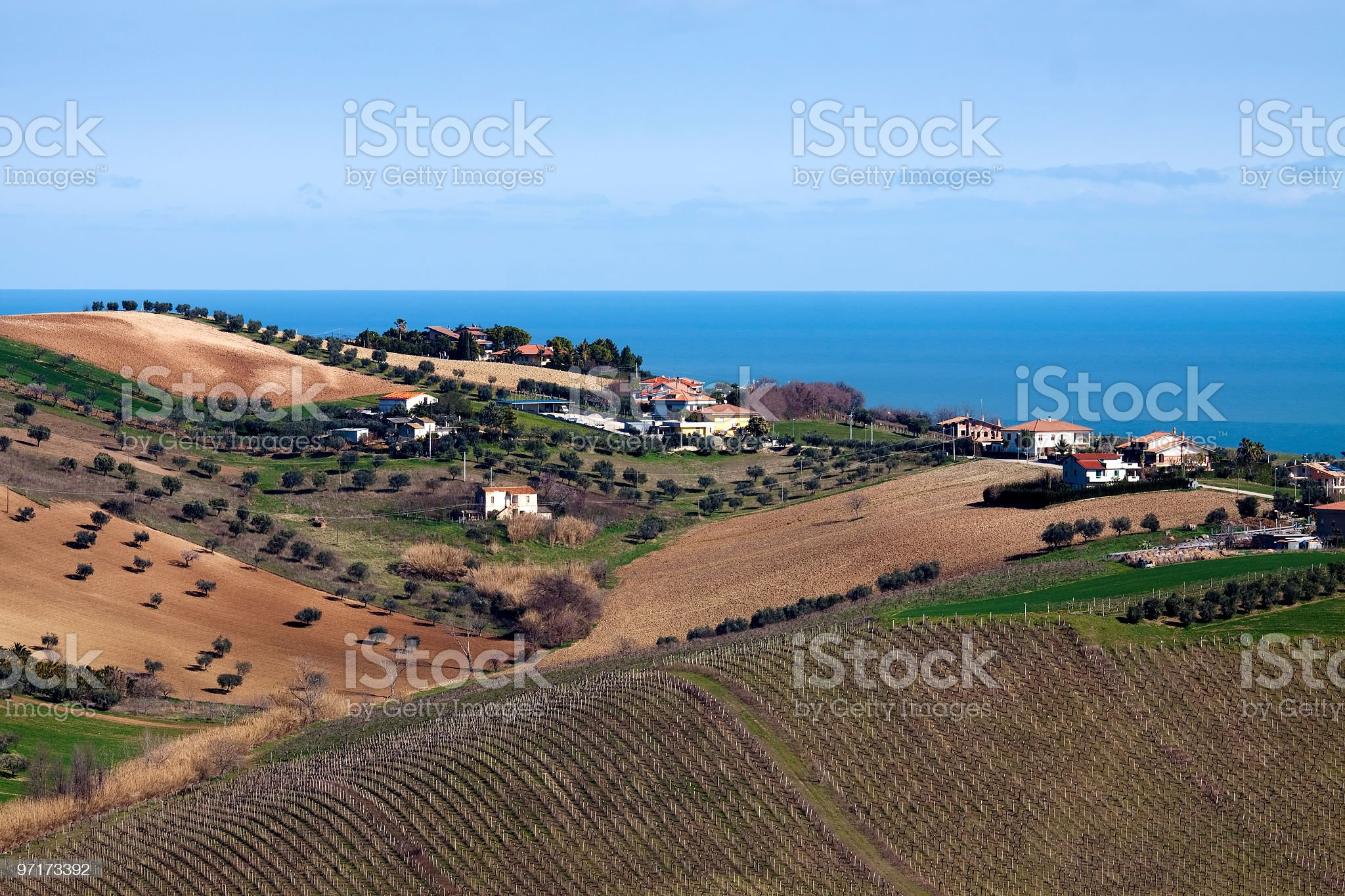 Vineyard near sea royalty-free stock photo