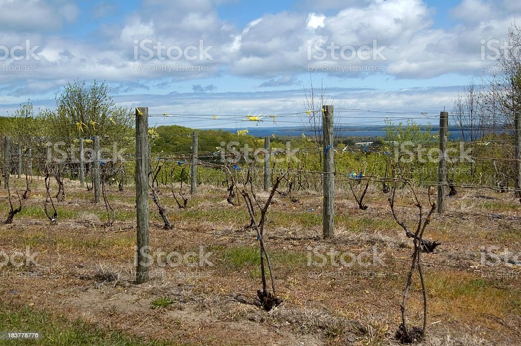 Vineyard near Traverse City in Spring royalty-free stock photo