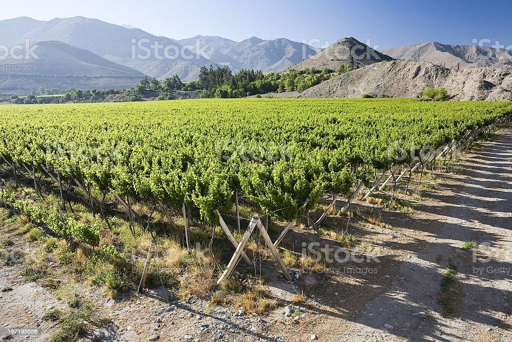 Vineyard near Vicuna, Chile stock photo