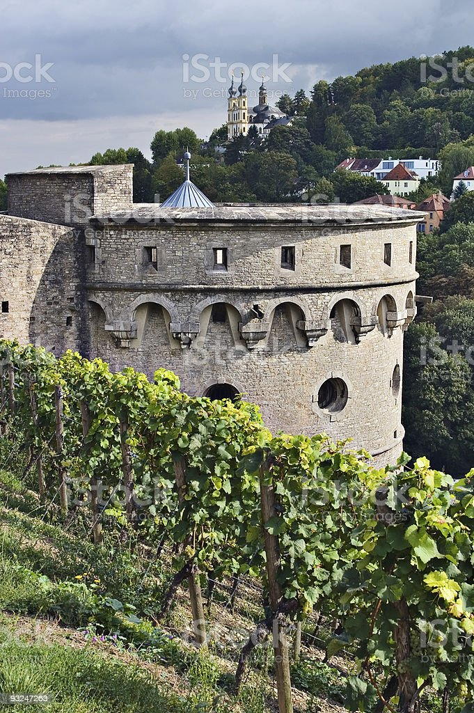 Vineyard next to Marienberg Fortress stock photo