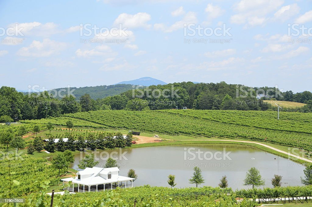 Vineyard North Georgia royalty-free stock photo