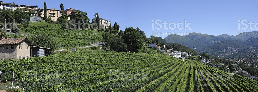 Vineyard of Porza near Lugano stock photo