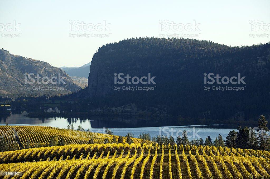 vineyard okanagan valley mcintyre bluff royalty-free stock photo