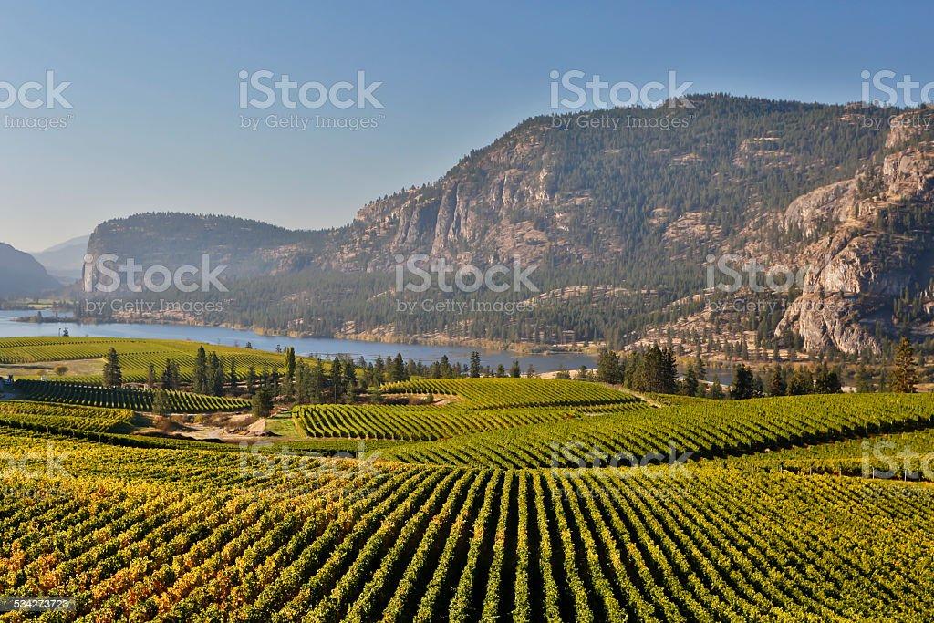 vineyard okanagan valley mcintyre bluff vasuex lake stock photo