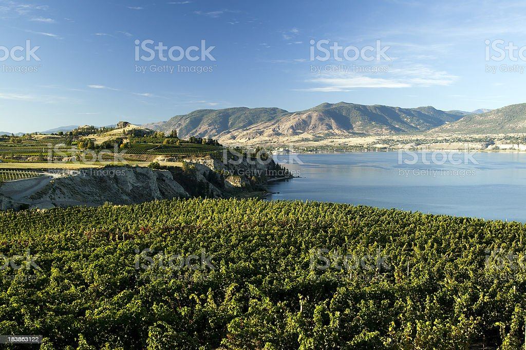 vineyard okanagan valley penticton naramata winery stock photo