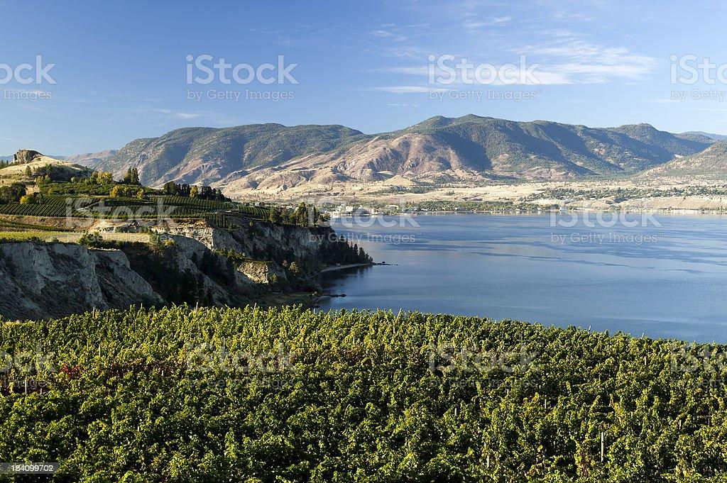 vineyard okanagan valley penticton naramata winery royalty-free stock photo