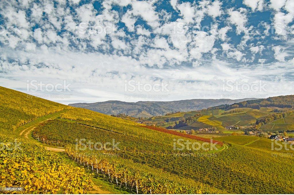 Vineyard on a sunny Autumn day stock photo