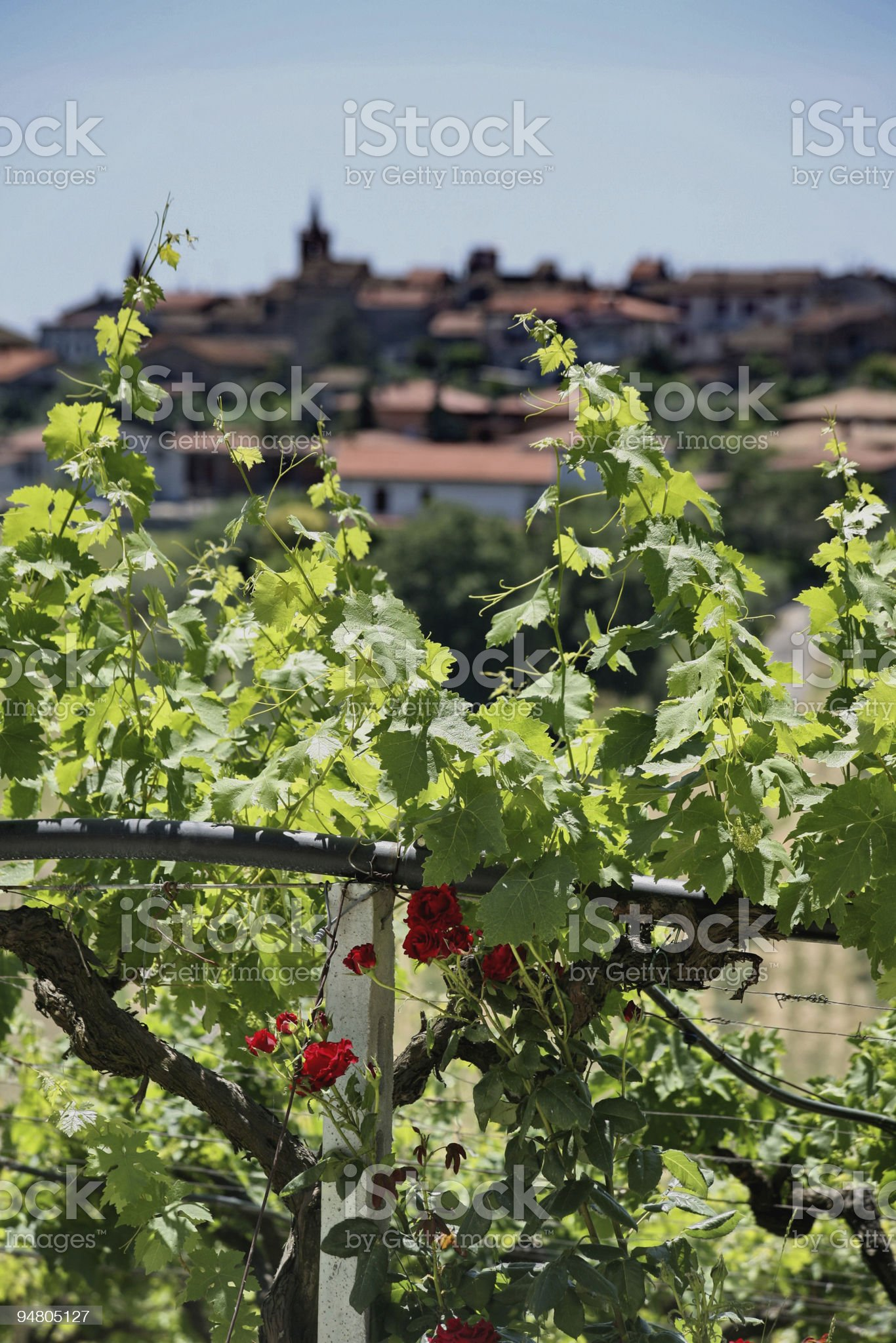 vineyard on the hills royalty-free stock photo
