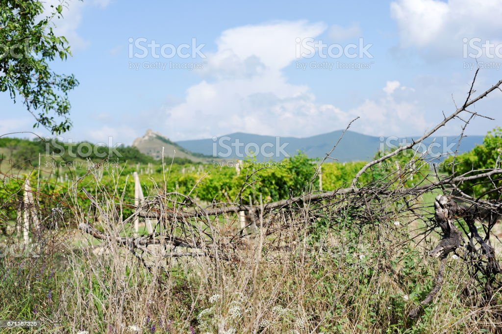 Vineyard over the barbed wire in Crimea, Russia stock photo