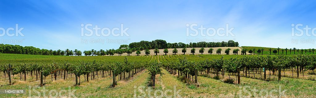 Vineyard Panorama royalty-free stock photo