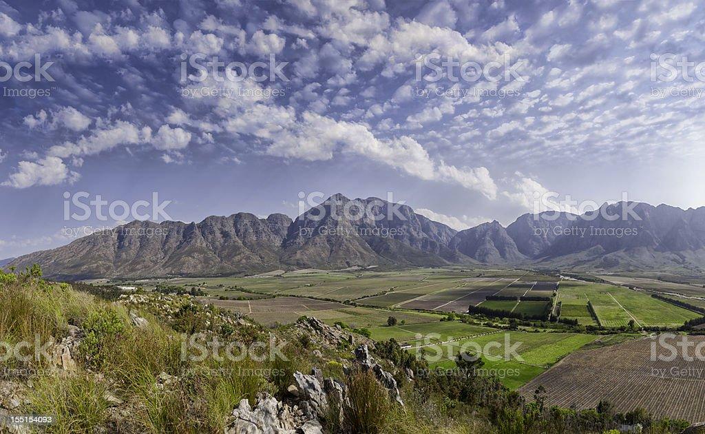 Vineyard Panorama stock photo