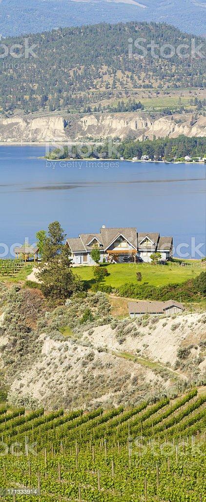 Vineyard Penticton Okanagan Lake stock photo