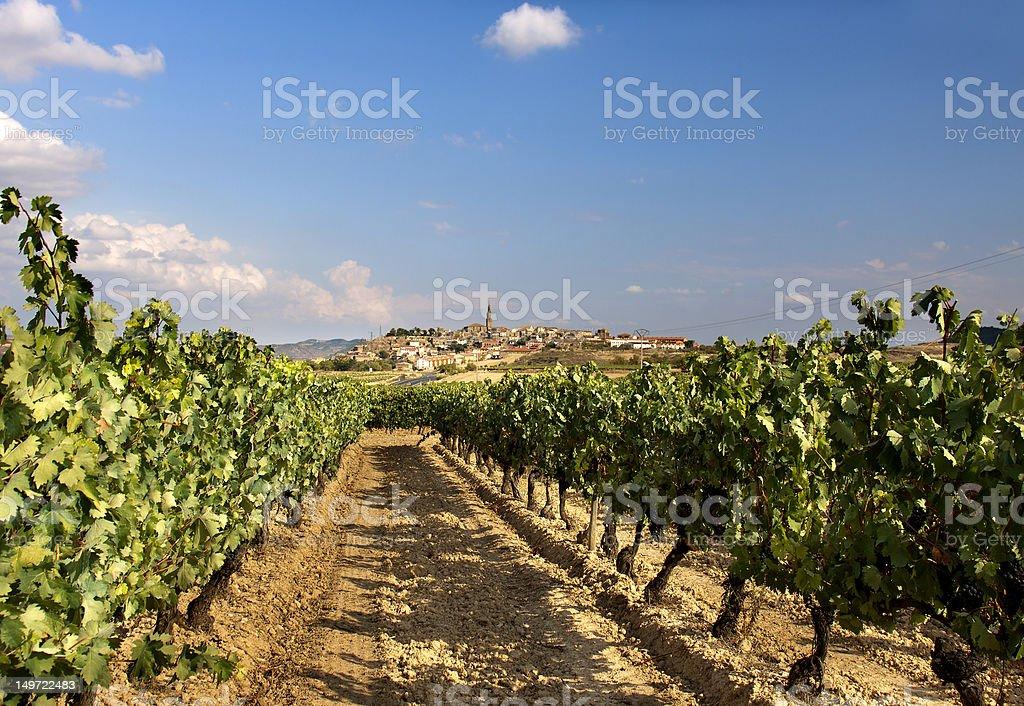 Vineyard (La Rioja,Spain) royalty-free stock photo