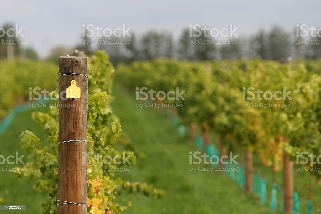 Vineyard post stock photo