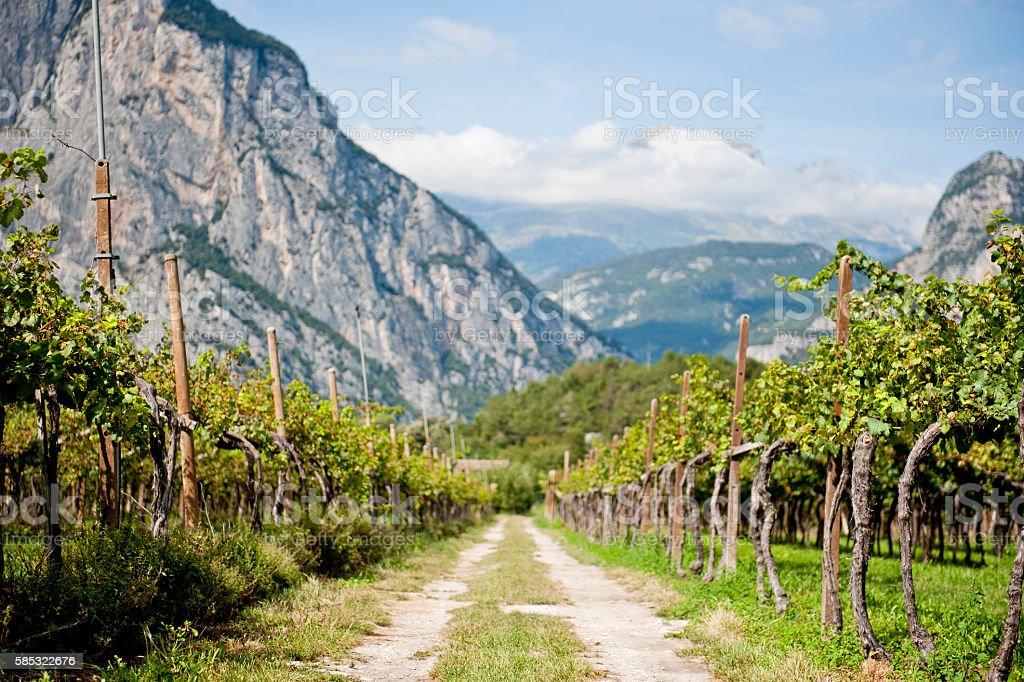 Vineyard Road Path Mountains stock photo