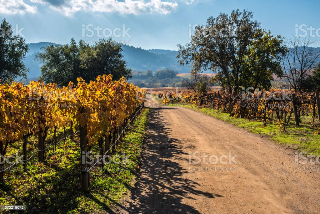 Vineyard road stock photo