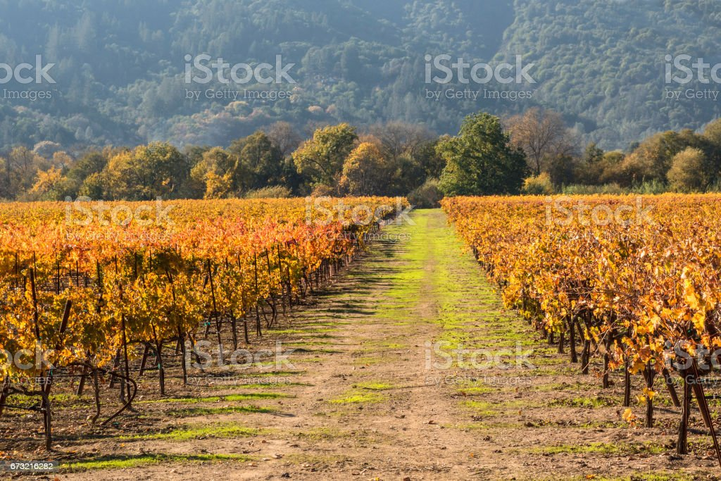 Vineyard rows and road stock photo