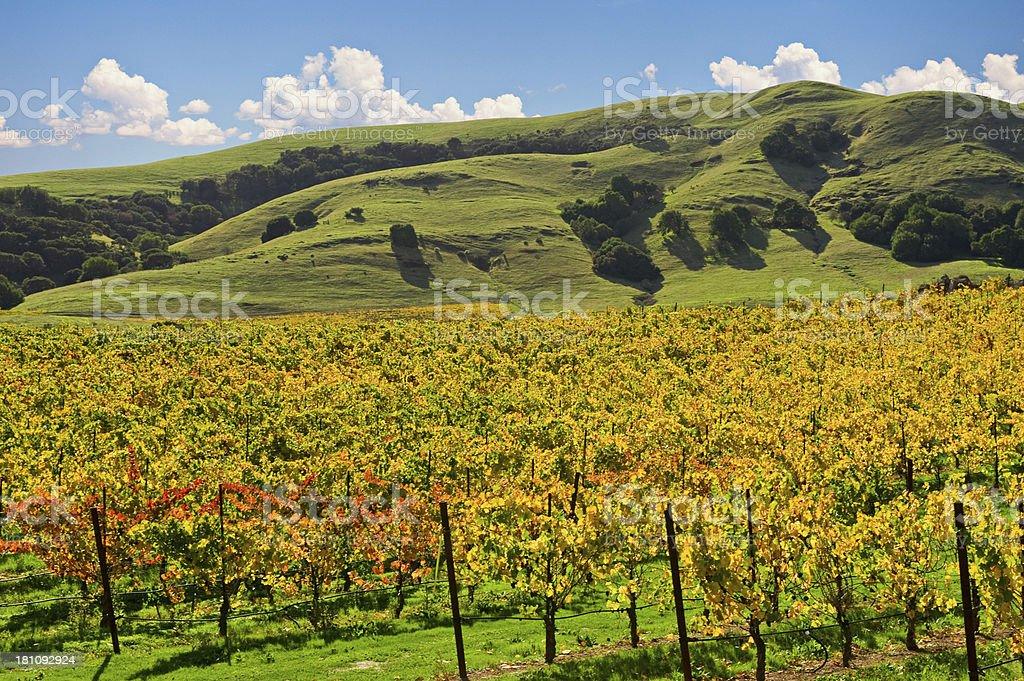 Vineyard Sonoma Valley royalty-free stock photo