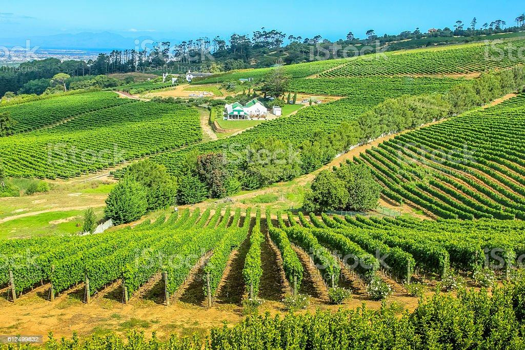 Vineyard South Africa stock photo