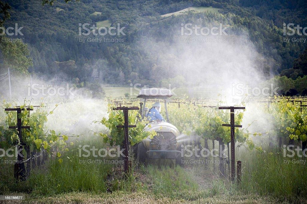 Vineyard Spraying royalty-free stock photo