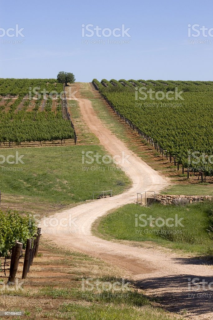 Vineyard  Spring in the Clare Valley,South Australia stock photo
