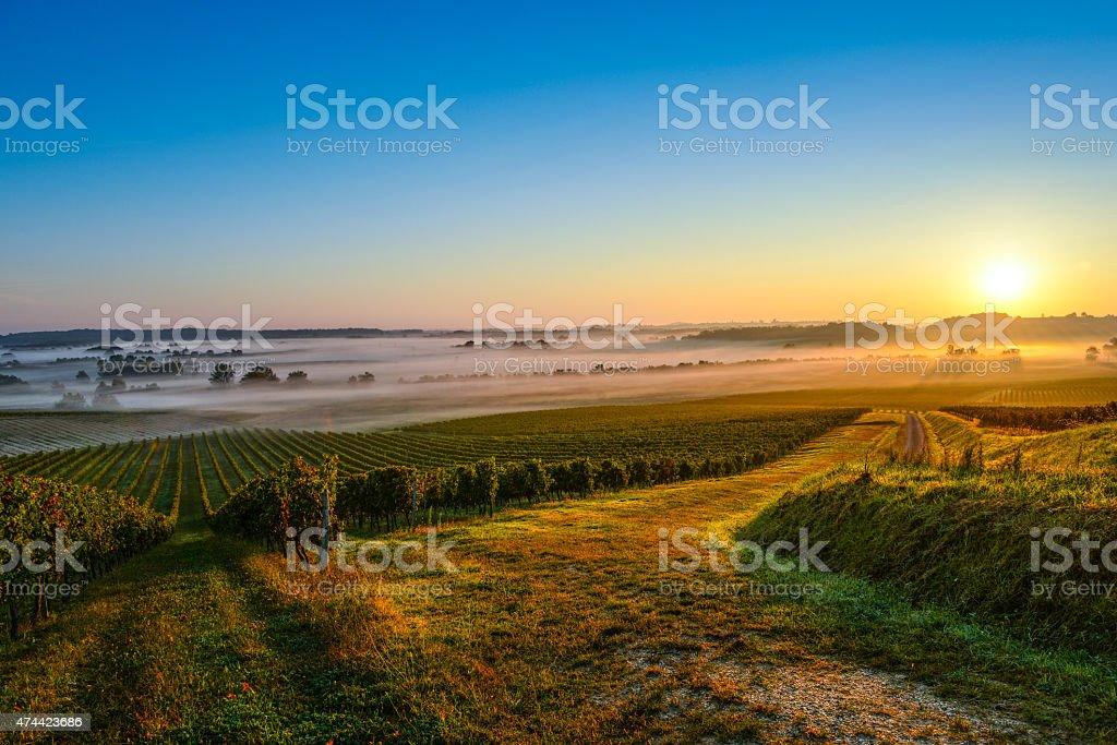 Vineyard Sunrise stock photo