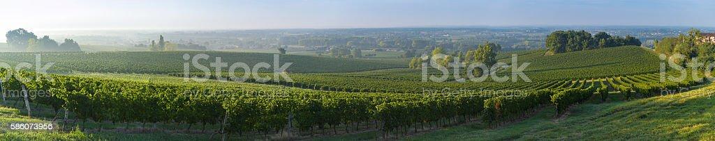 Vineyard Sunset Bordeaux France stock photo
