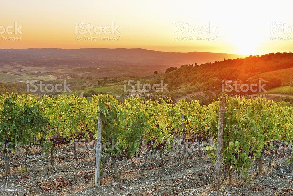Vineyard sunset from Tuscany stock photo