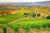 Vineyard sunset landscape from Tuscany