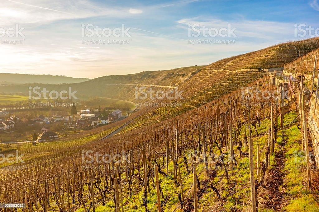 vineyard sunset / sunrise stock photo