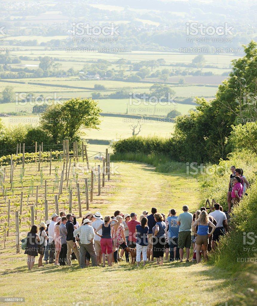 Vineyard tour stock photo