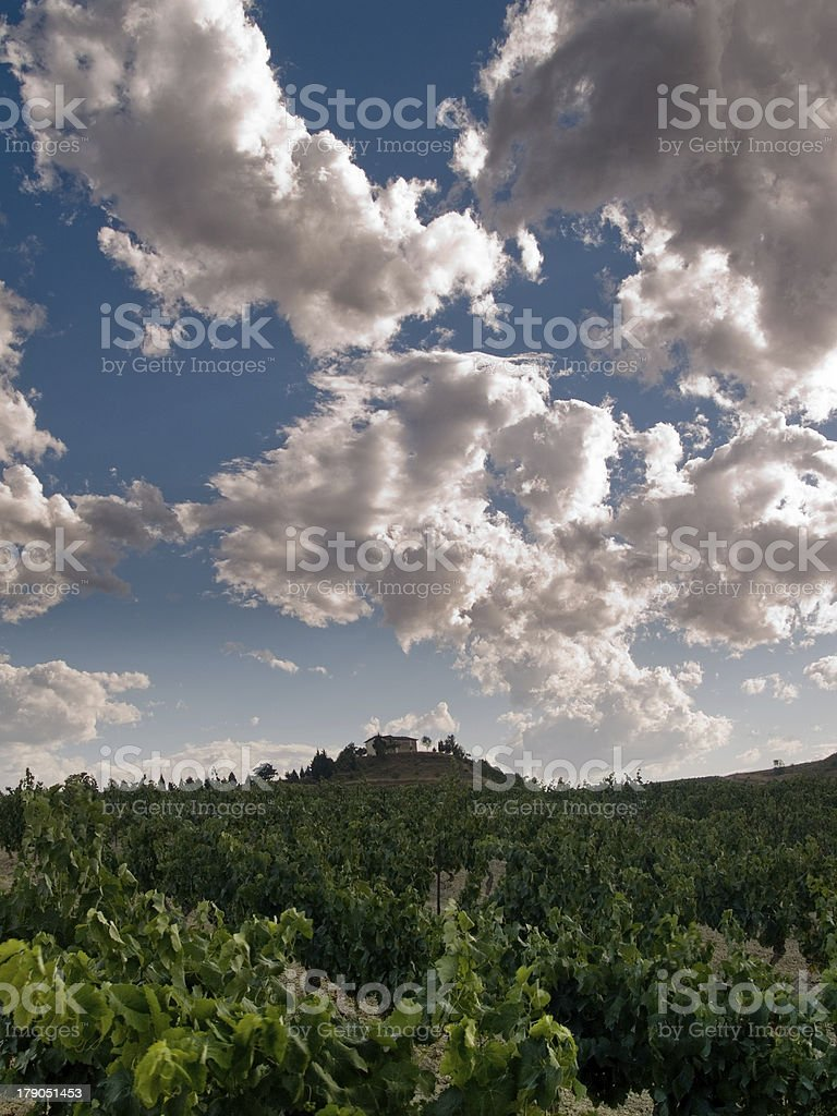Vineyard under the clouds royalty-free stock photo