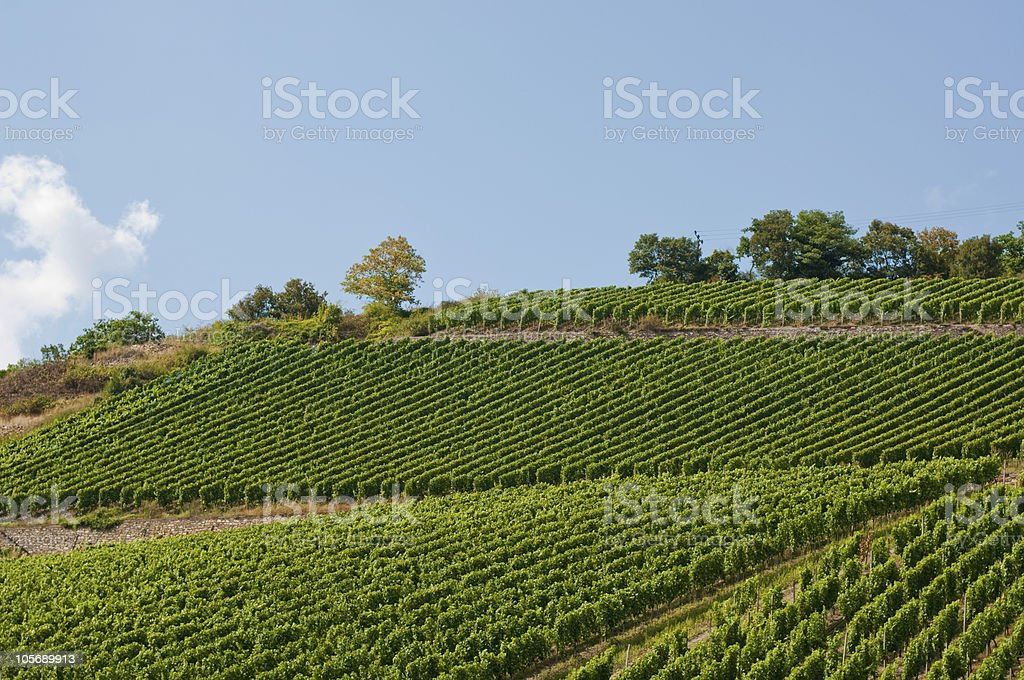 vineyard valley in germany royalty-free stock photo