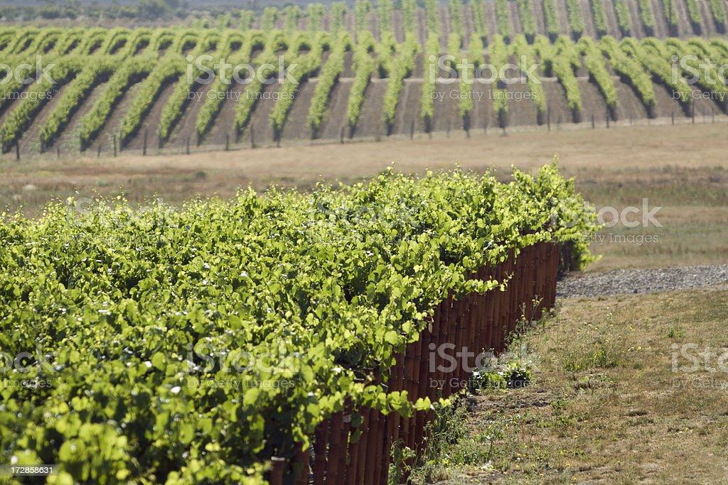 Vineyard View royalty-free stock photo
