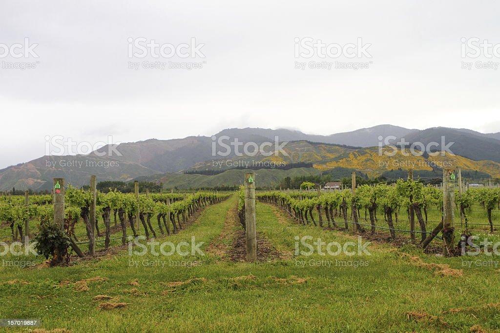 Vineyard views stock photo