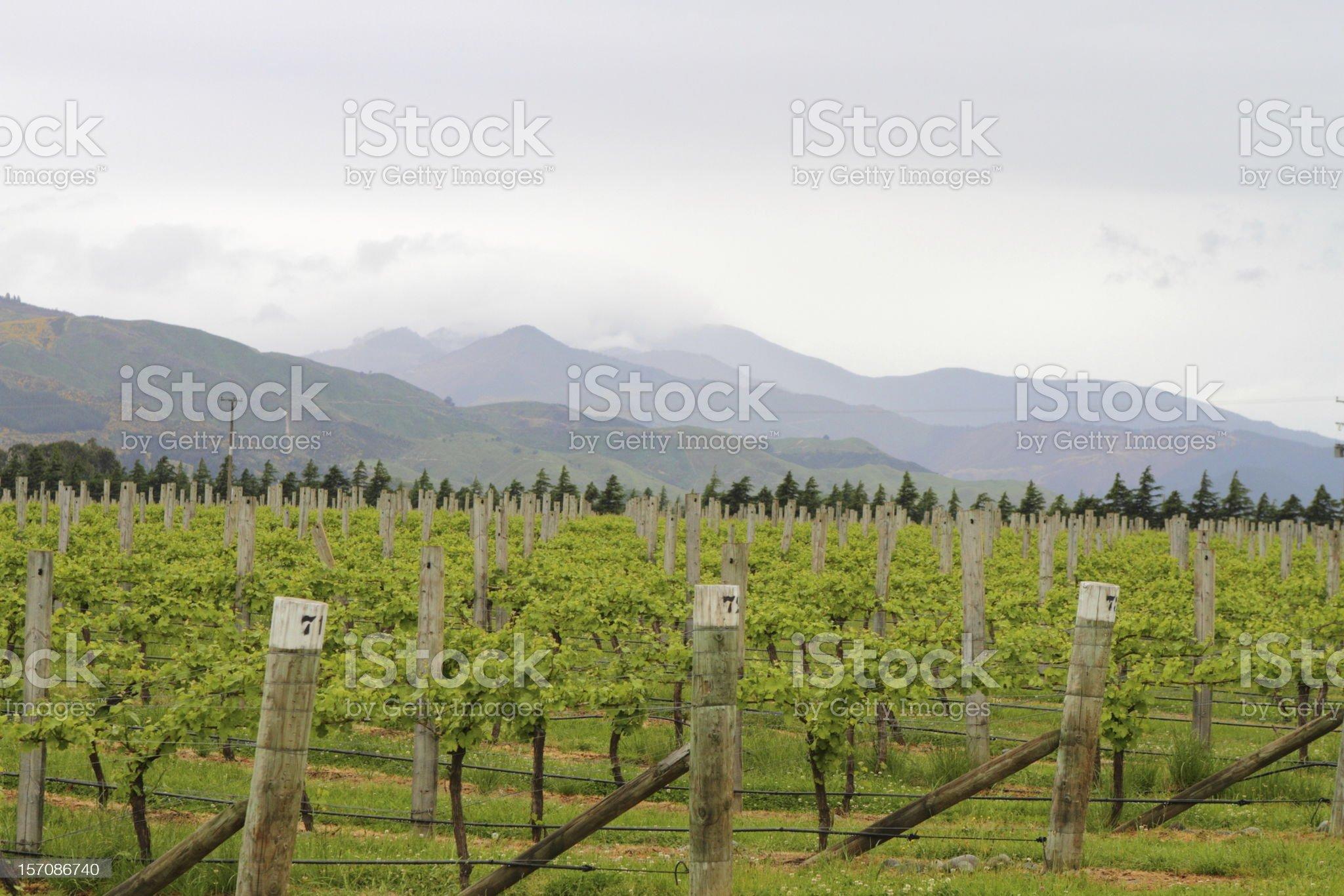 Vineyard views royalty-free stock photo