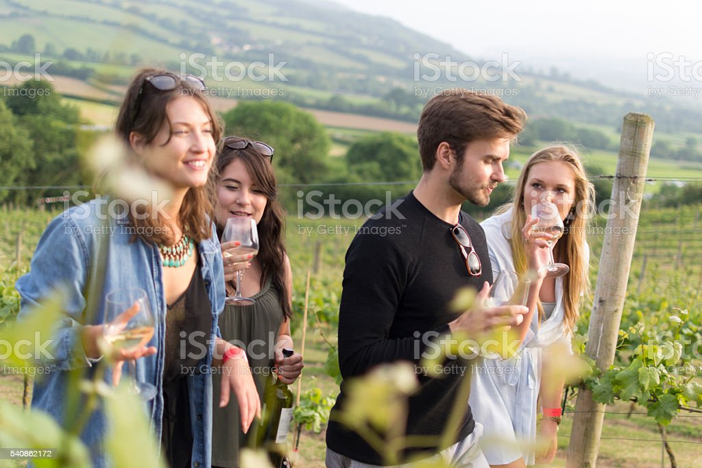 Vineyard walk and tasting stock photo