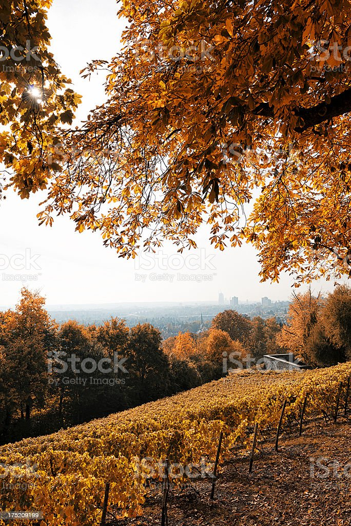 Vineyard, Weinberg, Lohrberg, Frankfurt, Rheingau, Skyline, Germany royalty-free stock photo