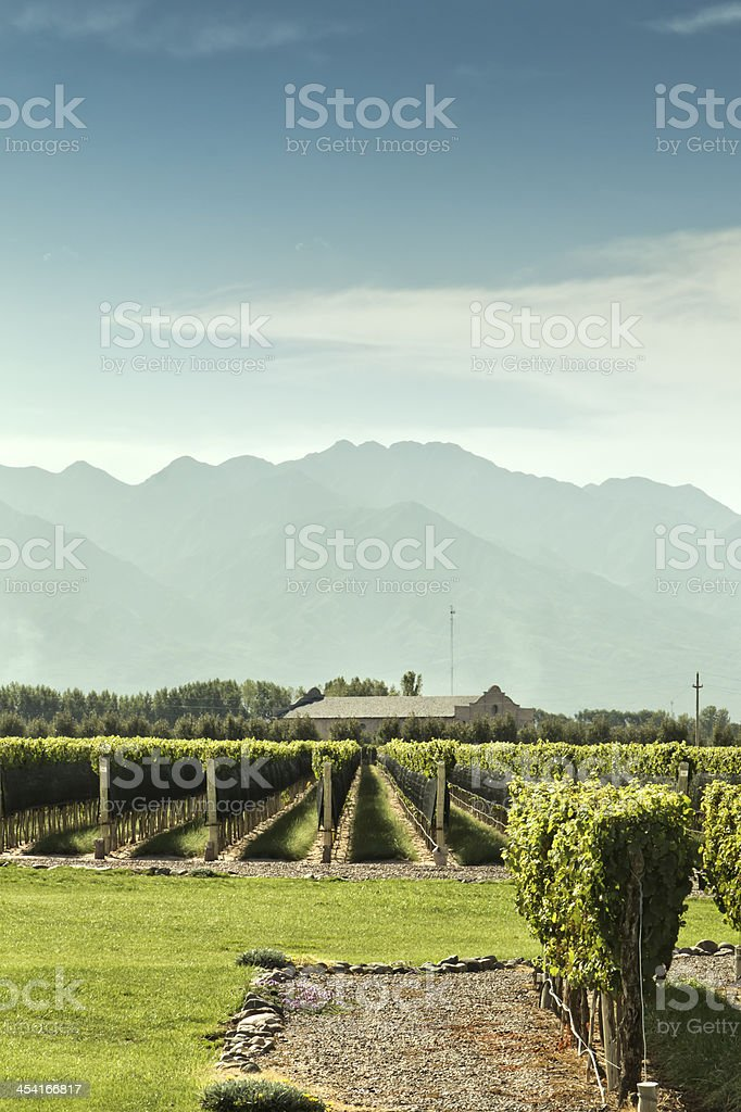 Vineyard, winery and mountains royalty-free stock photo