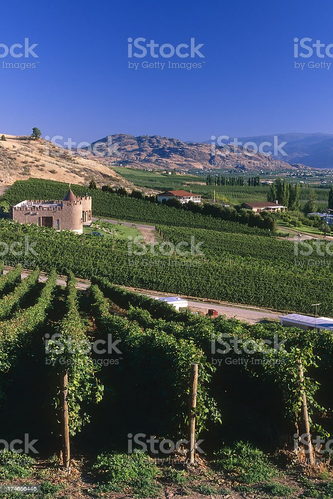 vineyard winery osoyoos okanagan valley agriculture royalty-free stock photo