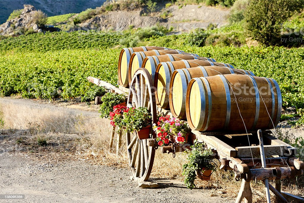 vineyard with barrels, France stock photo