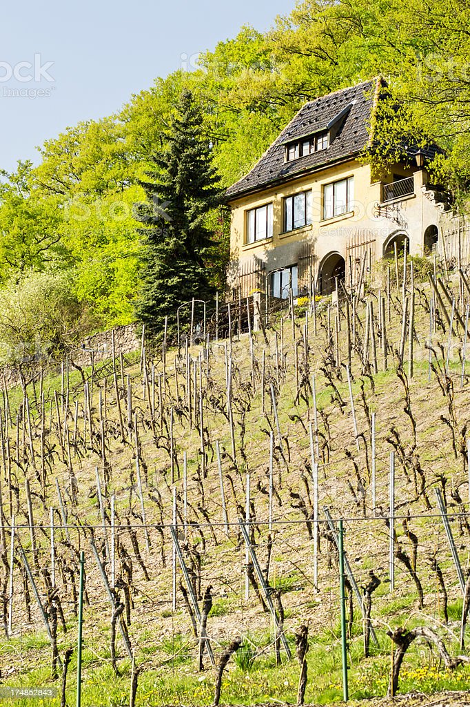 Vineyard with old wine grower house royalty-free stock photo